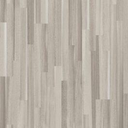Acacia Grey
